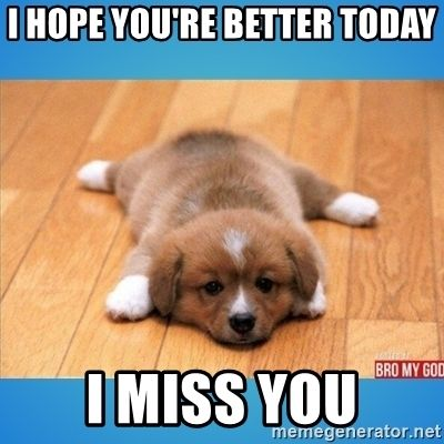 Feel Better Pup I Hope You Re Better Today I Miss You Feel Better Funny Get Well Quotes Feel Better Quotes