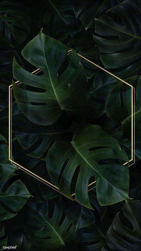 Hexagon golden frame on a tropical background | premium image by rawpixel.com / Adj / HwangMangjoo