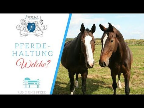 Denk Immer Daran Dein Pferd Ist Ein Herden Und Steppentier Mit Bildern Pferde Tiere Reiten