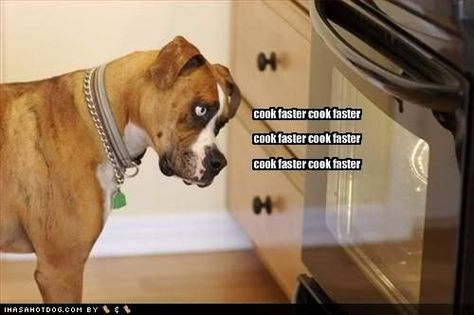 Funny Dogs With Words Funny Dog Pictures Funny Dogs Dogs