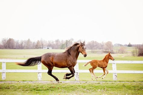 """you poetry in motion and I will show you a horse."""" -Unknown - - -  #equine #equinephotography #equinephotographer #horse #horsephotography #horsesofinstagram #featuremesophie #bestofequines #horselove #equestrian #foal fever #11ksjpaction #foal"""