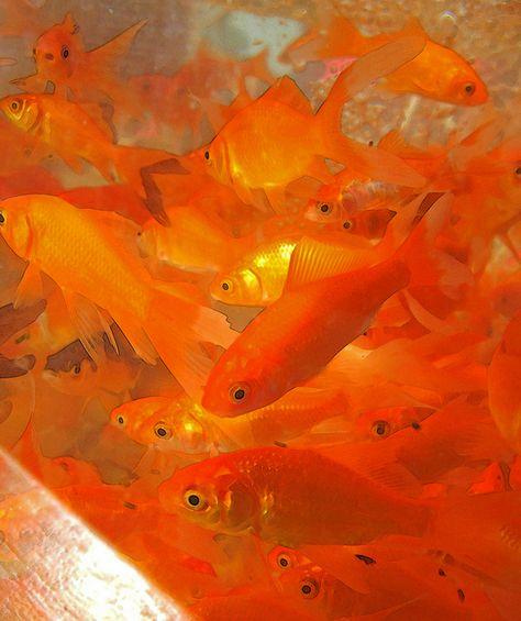 Imagen de orange, fish, and aesthetic Rainbow Aesthetic, Orange Aesthetic, Aesthetic Colors, Aesthetic Photo, Aesthetic Pictures, Music Aesthetic, Photography Aesthetic, Art Photography, Murs Oranges