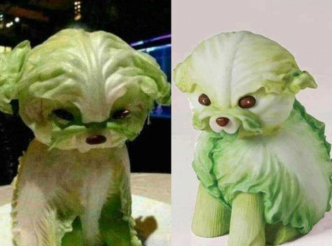 .lettuce dog