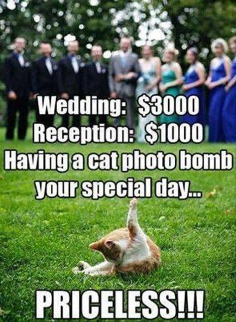 Funny Pictures Of The Day 76 Pics