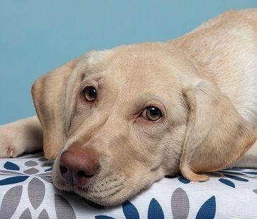 Adopt Ava 16 On Dog Adoption Pet Adoption Adoption