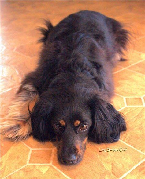 Stovetop Hushpuppies No Deep Frying Required Floor Cleaner Hush Puppies Homemade