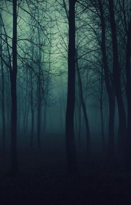 Curse Of The Black Forest Nature Iphone Wallpaper Background Forest Wallpaper