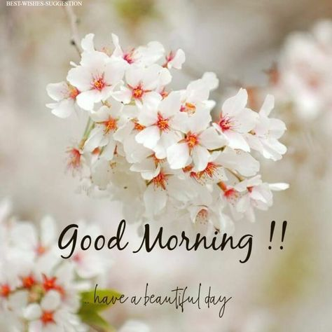 Good Morning Images | Morning Quotes | Morning Wishes