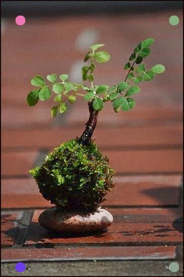 Ok Since I Don T Speak Japanese I Will Guess That This Is A Planter That Can Grow Moss On The Outside A Neat Idea Mini Plants Mini Garden Kokedama