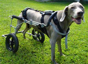 Dog Harness Reviews Help Emup Testimonials Help Em Up Dog