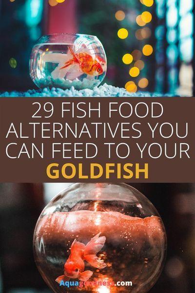 29 Fish Food Alternatives For Goldfish In 2020 Aquarium Fish Food Fish Recipes Goldfish Food