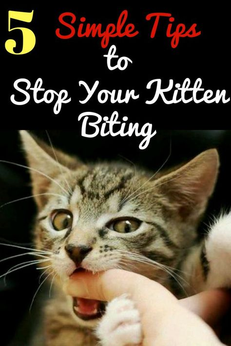 5 Simple Tips To Stop Your Kitten Biting Kitten Biting Cat