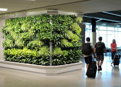Livewall Living Wall Brings Natural Beauty And Calm To The Tsa Checkpoint At Appleton International Airport Atw Liv Living Wall Living Wall Indoor Appleton