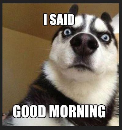 Funny Good Morning Memes For Facebook Instagram Whatsapp Funnygoodmorningmemes Go Funny Good Morning Memes Funny Good Morning Images Funny Saturday Memes