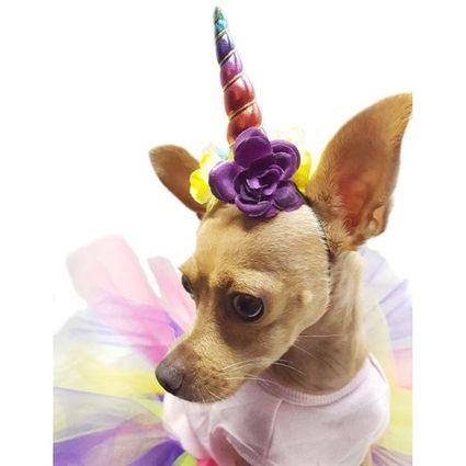 Unicorn Tutu Halloween Dog Costume With Images Unicorn Dog