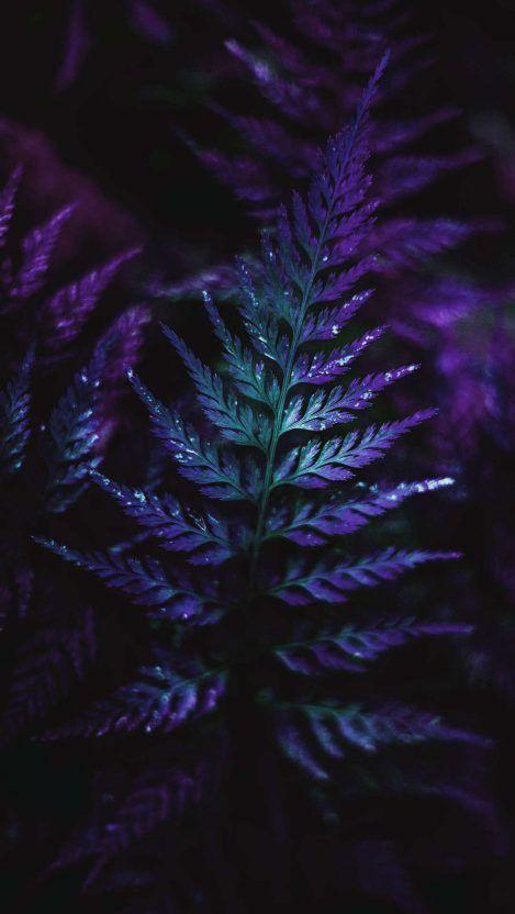Mini Forest Plants Macro Iphone Wallpaper Fioletovye Fony Zelenye Fony Fioletovye Rozy