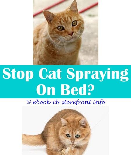 10 Discerning Hacks Roach Spray Cats Best Enzyme Spray For Cat Urine Cat Antiseptic Spray Pets At Home Is There A Spray To Keep Cat Off J Cat En 2020 Sensible