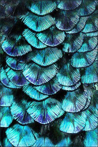 Peacock Plumage, no attributes provided, #ArtOnTap #PurelyInspiration