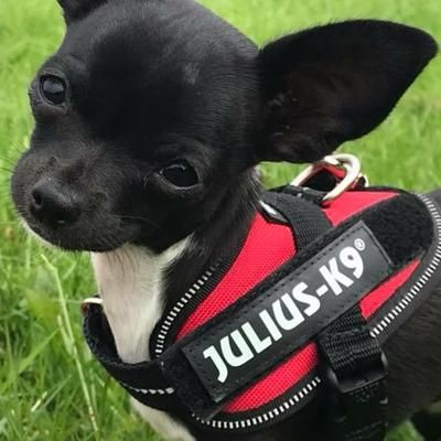 Julius K9 Idc Powerharness For Puppies And Chihuahuas Red