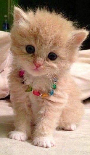 Kitten Cats Animals Cute Adorable Kittens Cutest Cute Cats