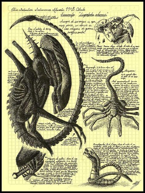 We've broken down the official stages of the Alien race known as Alien or the Xenomorph. Go inside and look at Aliens you never seen before. Saga Alien, Alien Film, Alien Art, Alien Vs Predator, Les Aliens, Aliens Movie, Xenomorph, Science Fiction, Fiction Movies