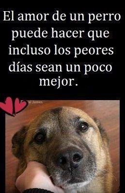 Incondicional Poderoso Y Transparente Asi Es El Amor Y Un Perrito Sabe Brindarlo Mejor Amigo Del Hombre Perros Frases Perrito