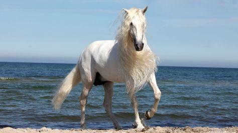 Beautiful White Horse Wallpaper E1j 1920x1080 Px 361 83 Kb