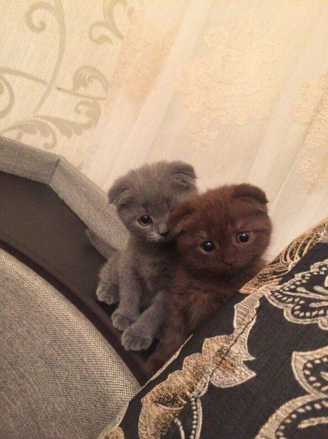 AWWWW ..... kitty cat adorable, baby, best friends