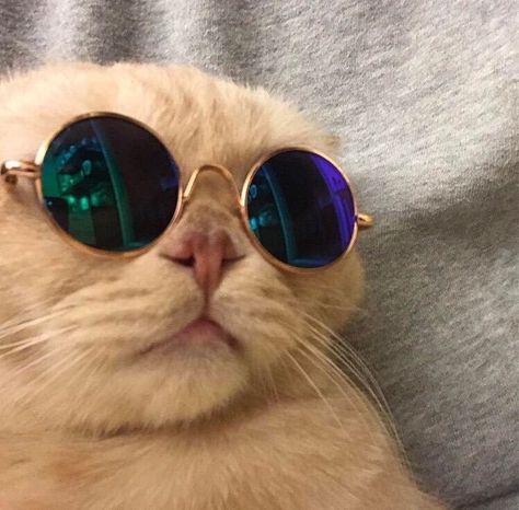 Pin Oleh A F Cessie Di Memes Kucing Lucu Lucu Anak Kucing