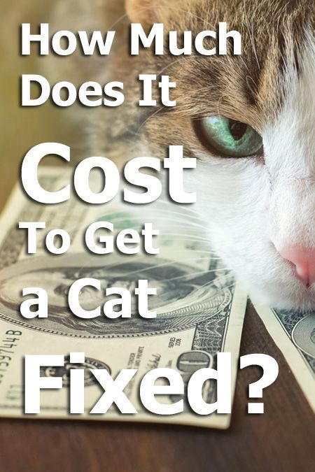 How Much Does It Cost To Get A Cat Fixed Catcarearticles Cat Care Sick Cat Cat Neutering
