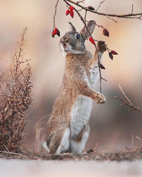 Ansichtskarte: niedliches Fuchs 3 -D Baby Little Fox Kitten