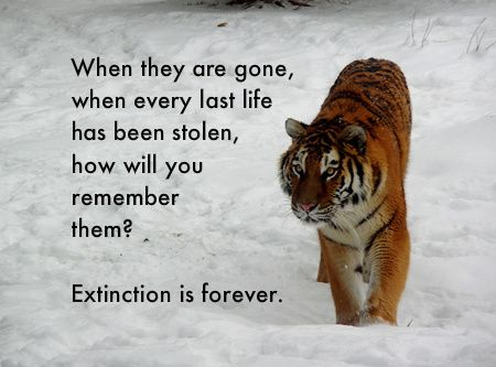 When they are gone, when every last life has been stolen, how will you remember them?    Extinction is forever.