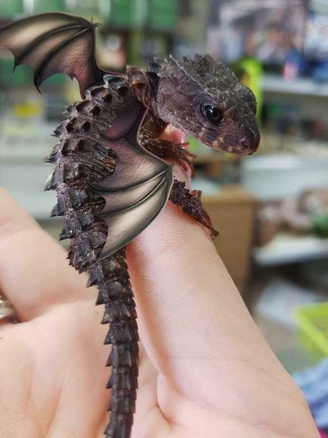 Little dragons! Post with 39 votes and 0 views. Shared by Little dragons! Cute Fantasy Creatures, Cute Creatures, Magical Creatures, Mythical Creatures Art, Woodland Creatures, Little Dragon, Baby Dragon, Dragon Wing, Cute Reptiles