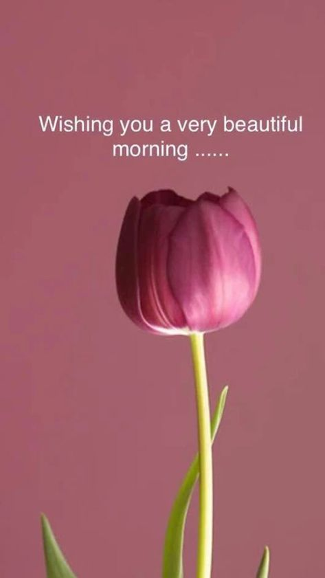 28 Amazing Good Morning Quotes and Wishes with Beautiful Images 16