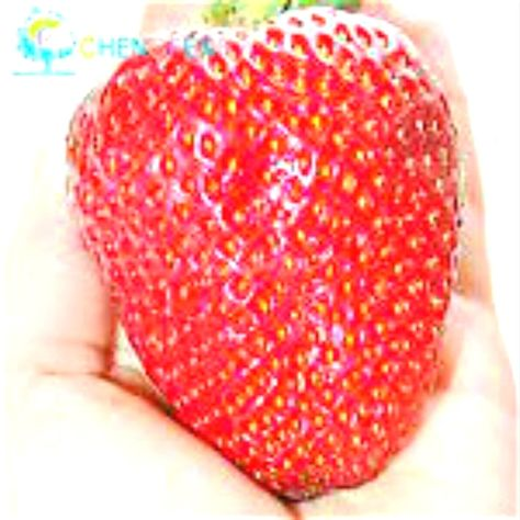 Cheap giant strawberry seeds, Buy Quality strawberry seeds directly from China fruit seeds Suppliers: Giant Strawberry Seeds Rare Big Diy plant bonsai Fragaria Fruit Seed For Home Garden flower Plants Cherry Berry sementes