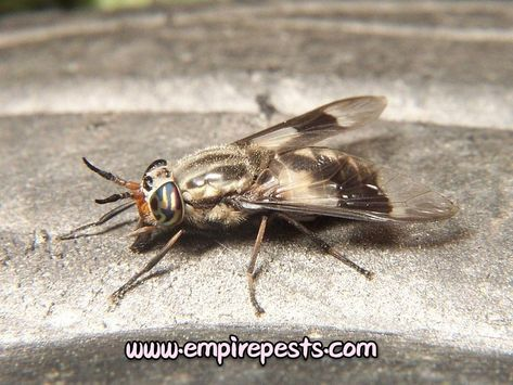 Get In Touch With Us Call Empire Pest Control Now On 1 647 745 4508 Visit Us For More Assistance Www Empirepests Com Bedbugsbite Deer Fly Deer Insects