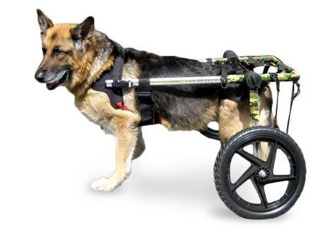 Dog Wheelchair Camo For Large Dogs 70 180 Lbs By Walkin Wheels Arnes Para Perros Perros Animales De La Granja