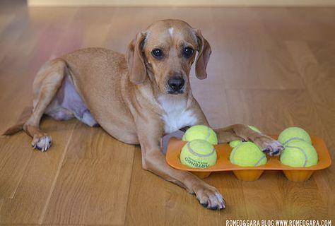 Juego De Inteligencia Casero Para Perros Buscar Premios Perros Imagenes De Perros Mascotas