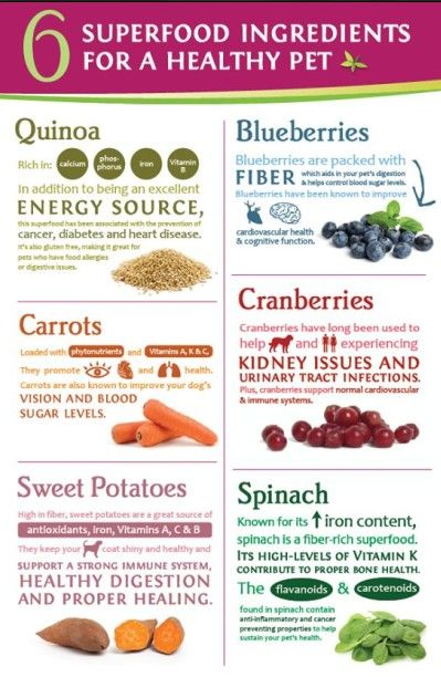 10 Healthy Ingredients To Add To Your Dog S Food Healthy Dog Food Recipes Make Dog Food Raw Dog Food Recipes
