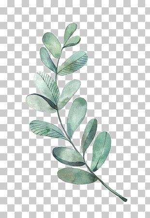 Ilustracion De Acuarela De Dibujo De Hoja Hojas Verdes Ilustracion De Planta De Hoja Verde Png Clipart Leaf Drawing Leaf Illustration Painting Illustration
