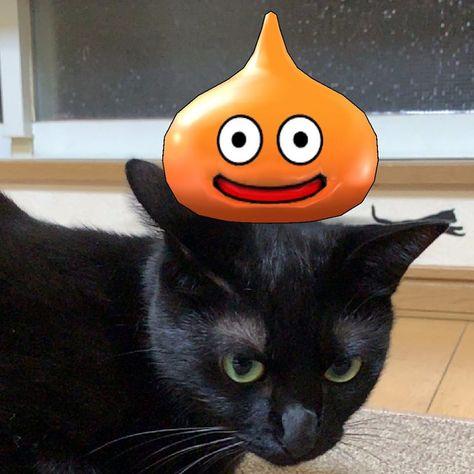 ˄·༝·˄ ♥スライムベスとワタシ♥ . 🐾 . 🐾 . 🐾 . #𓃠 #cat #kitten #고양이  #black #blackcat  #blackkitten #검은고양이 #ilovecats #love #instacat #dailycat  #black_cat_crew  #black_cats_of_ig #catsofinstagram  #blackcatsofinstagram #cats_of_instagram  #dqウォーク  #黒猫 #黒猫部 #黒 #猫 #ねこ部  #ねこのいる生活  #にゃんすたぐらむ  #ニャンすたぐニャむ 🐾