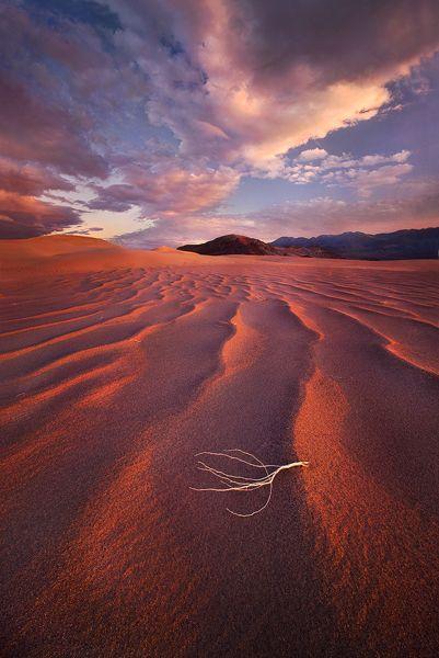 Desert Drifter, Death Valley National Park