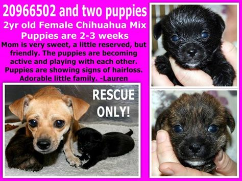 Fort Worth Tx Current Status Mom Babies Still In The