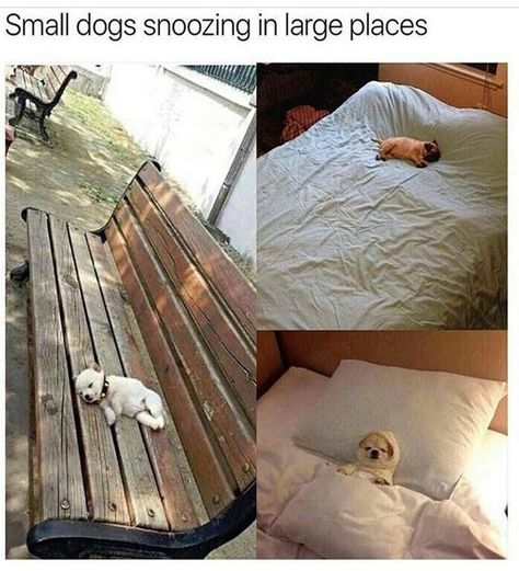 30 Dog memes for a positive Day. Puppers included - World's largest collection of cat memes and other animals Funny Animal Memes, Dog Memes, Cute Funny Animals, Cute Baby Animals, Funny Cute, Funny Dogs, Funny Memes, Meme Meme, Super Funny