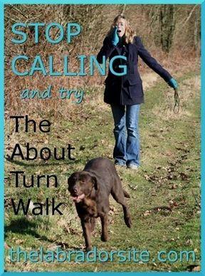 Dog Training Aggression Dog Training Reats Cesar Millan Dog