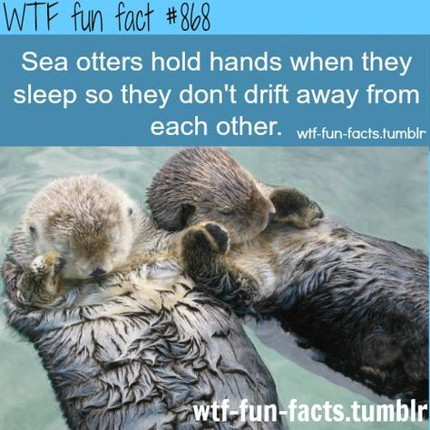 Cutest fact that ive seen so far :) WTF-fun-facts : funny weird facts ( Hermione whose patronus is an otter also holds hands with Ron when they sleep). :)