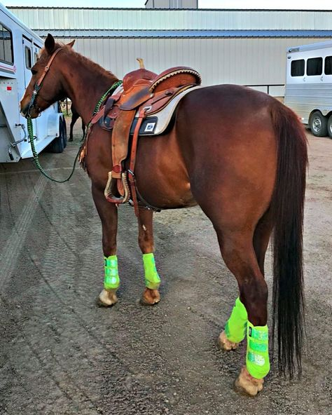 Barrel Racing Saddles, Barrel Racing Horses, Barrel Horse, Cute Horses, Horse Love, Beautiful Horses, Horse Photos, Horse Pictures, Horse Gear