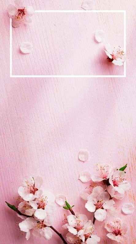 59 Ideas Flowers Wallpaper Iphone Spring Phone Backgrounds For 2019 Flower Background Iphone Flower Wallpaper Spring Wallpaper Iphone cute spring wallpaper