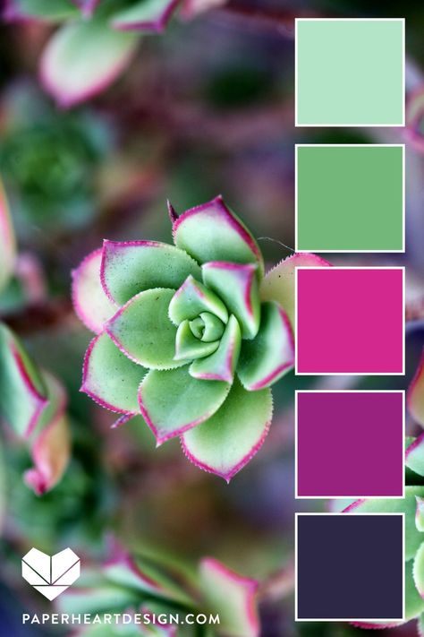 Color from nature is the best. In this blog post we explore succulents and you can find six color palettes perfect for #branding #interiordesign #weddingcolors #fashion and so much more. #color #colorinspo #colorinspiration #succulents #nature