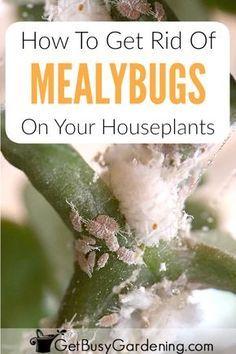 70b4c09b85877abd6b53e1d1e50b7655 - How To Get Rid Of Small White Bugs On Plants